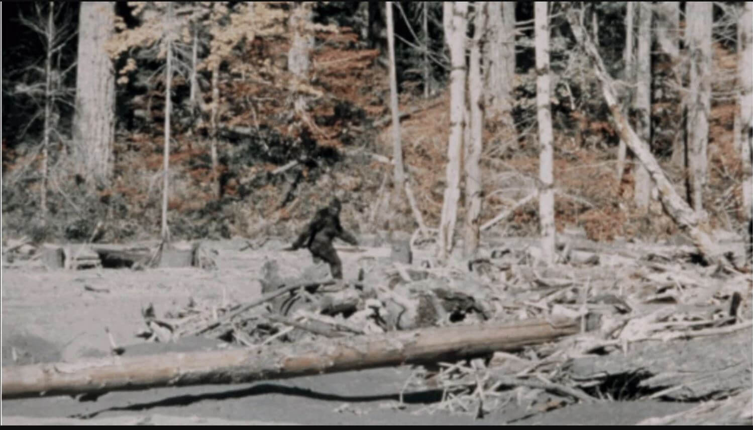 robert patterson bigfoot picture conspiracy podcast